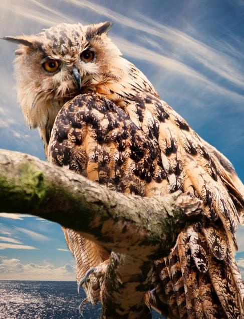 owl-nature-sky-clouds-39575 (2).jpeg