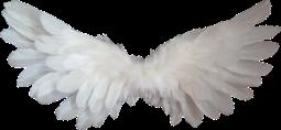 angel wings.png