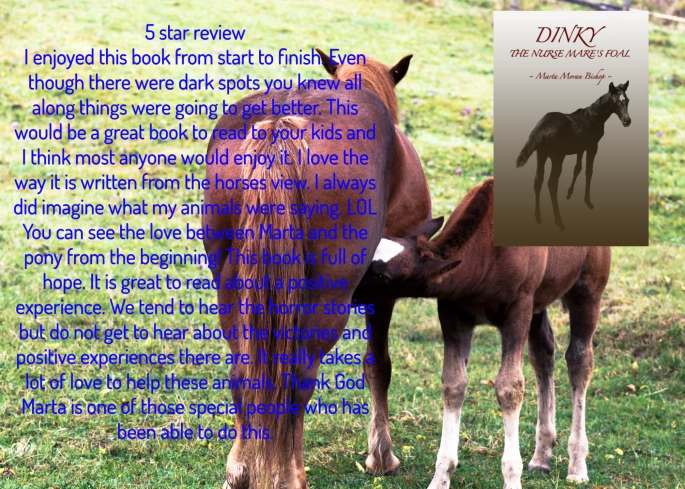 Marta dinky the nurse mare's foal review.jpg
